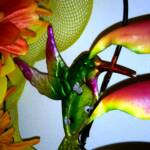 HUMMINGBIRD ON BIRD OF PARADISE PLANT